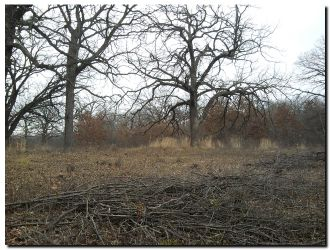 Invasive Shrub Control In The Franklin Savanna