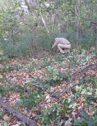 man in woods removing invasive plants