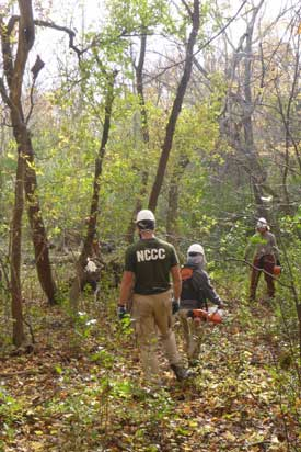 people removing invasive plants in woods