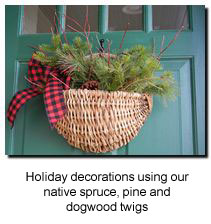 Pine spruce red osier and pinecones