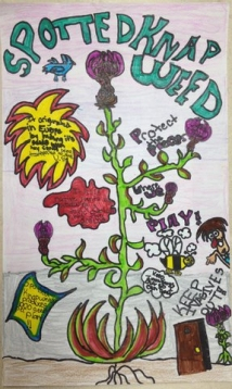 Spotted Knapweed Poster by Kaleigh Fitzgerald Waukesha
