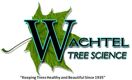 Wachtel Leaf with Slogan 2 doc